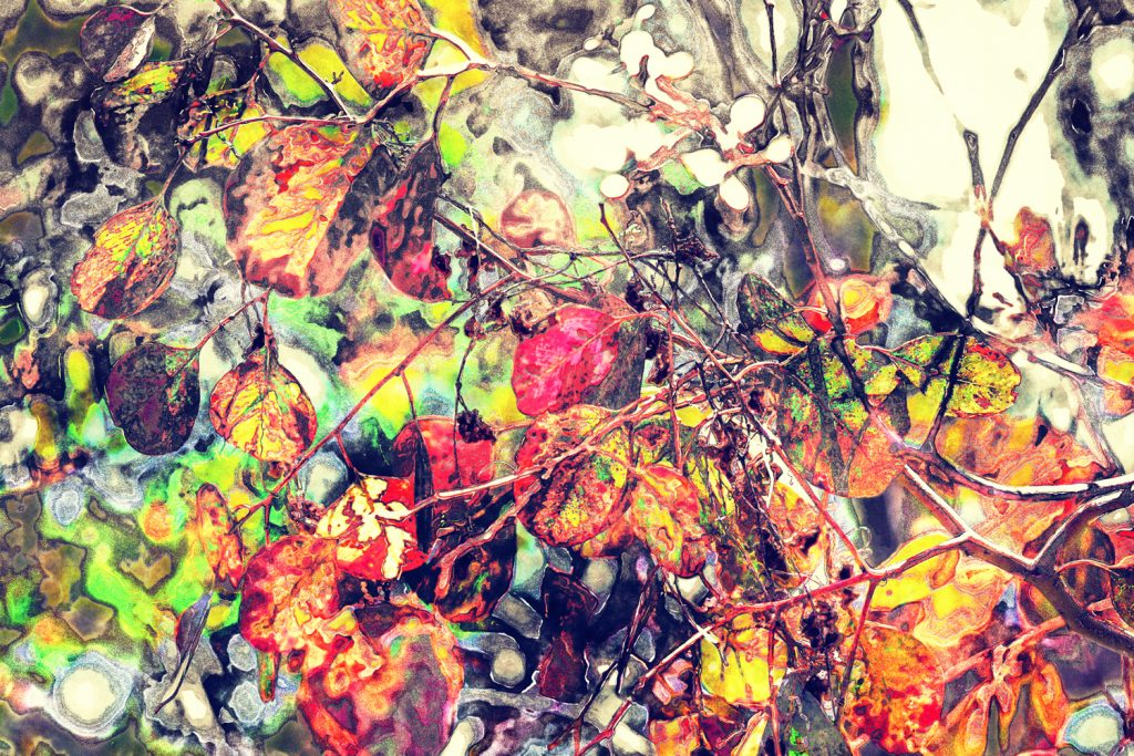 jumbled leaves