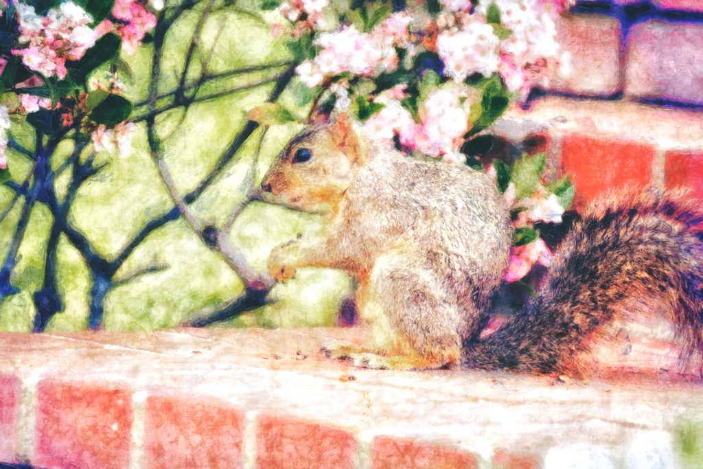 squirrel on brick steps