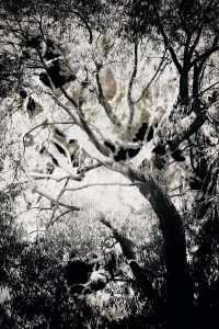 black and white grungy tree