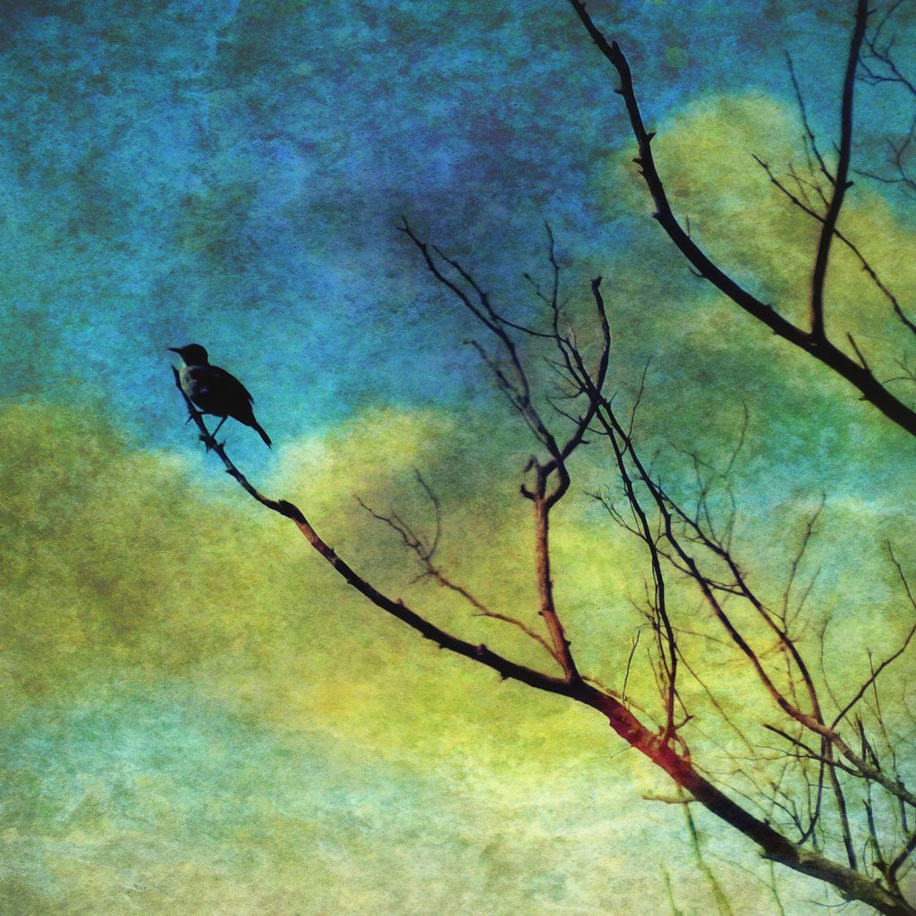 silhouette of a bird perched on a tree